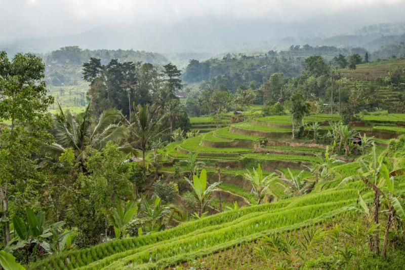 Bali 2015 - Blog-066