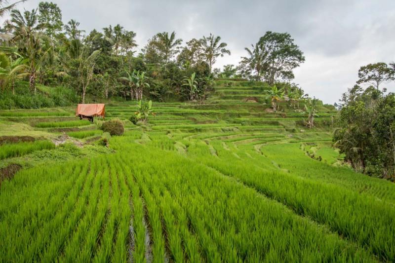 Bali 2015 - Blog-067