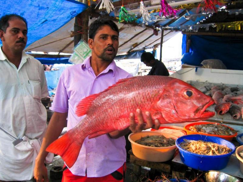 Mein Fisch stinkt?!?!?!?